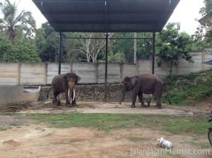 Atraksi gajah
