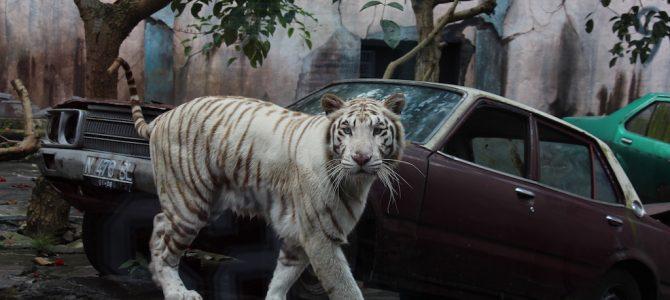 Batu Secret Zoo Jatim Park (Malang)